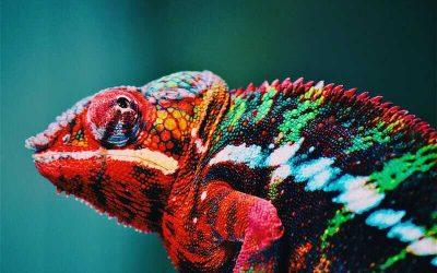 Comment bien choisir les couleurs de son identité visuelle ?