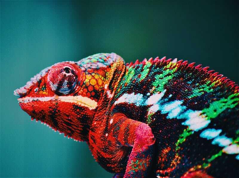 les couleurs vu par poulpemedia